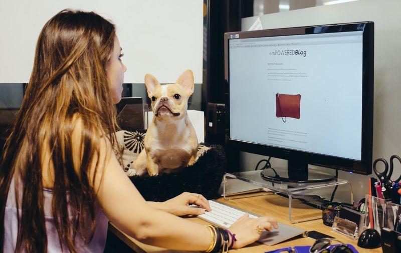 Psi v pisarni